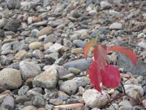 red-on-rocks