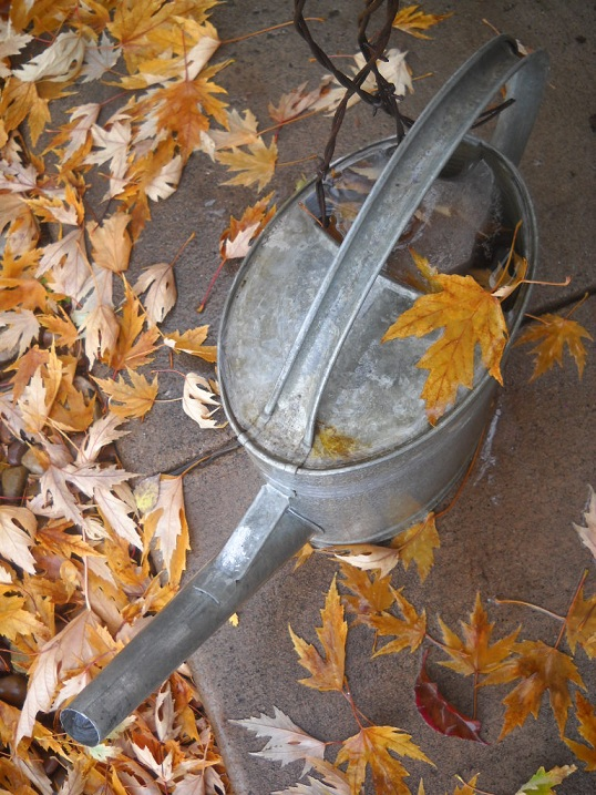 autumn leaves and a watering can