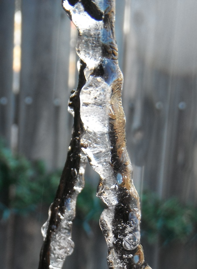 ice on barbed wire