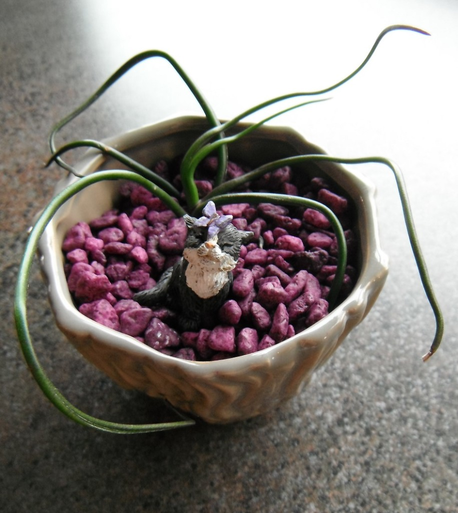 cat and air plant